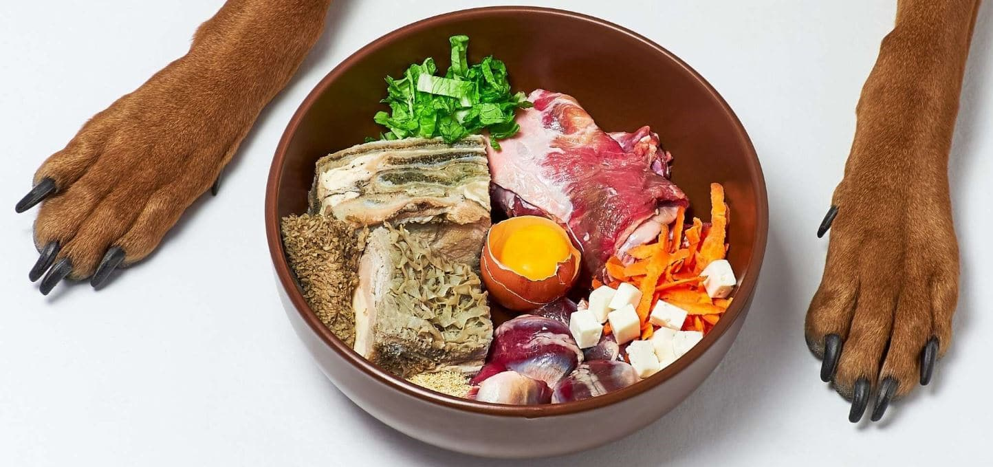 Raw food in bowl and dog's paws