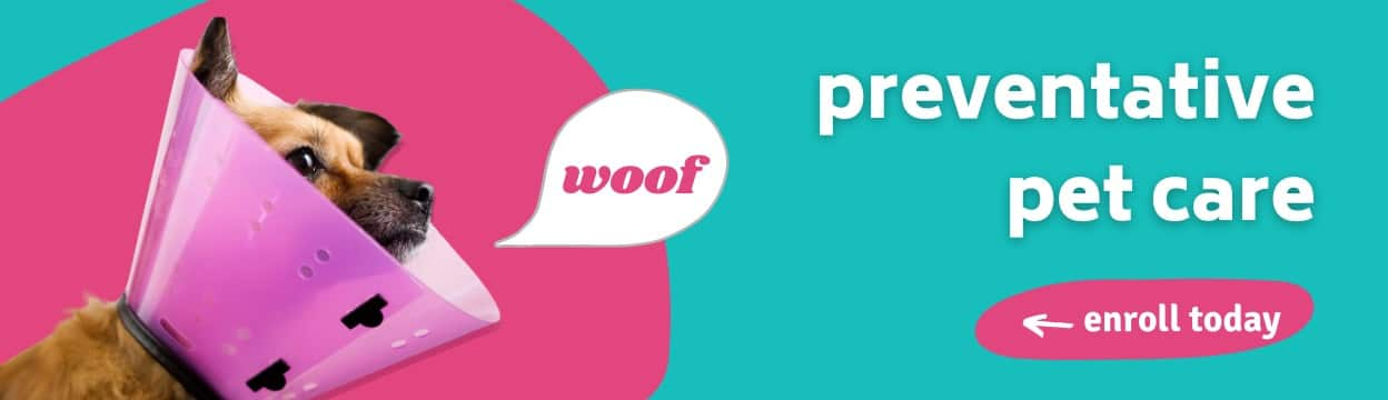 Details about preventive pet care from Prudent Pet