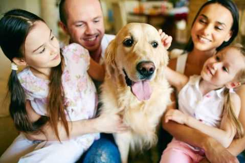 Dog being petted surrounded by family