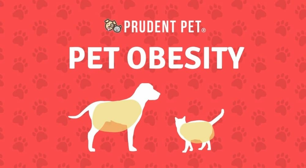 Overweight dog and cat illustration