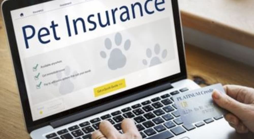 Pet insurance on the laptop screen