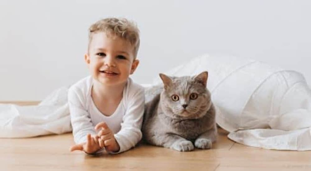 Boy cat in white blanket