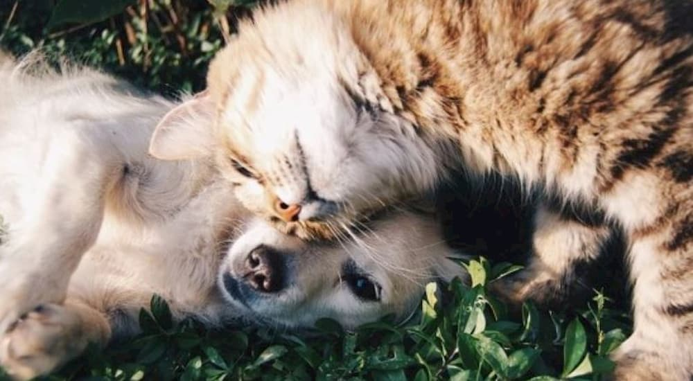 Cat and dog lying on grass