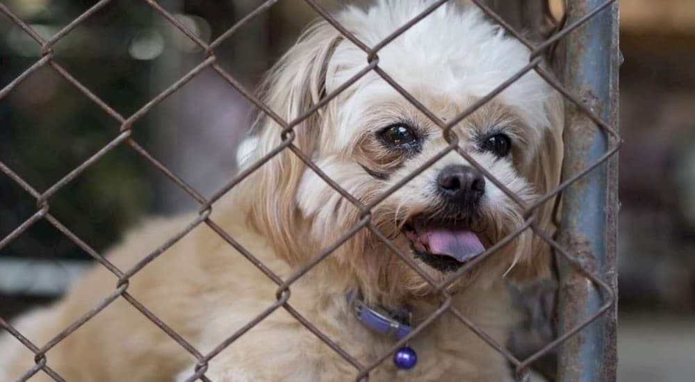 Dog in cage puppy mill