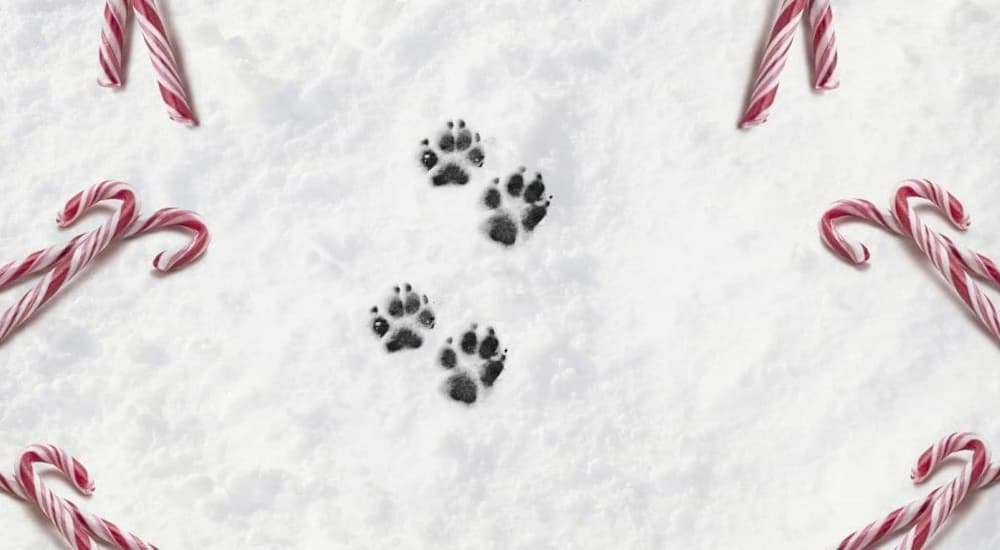 Dog's paw print on snow