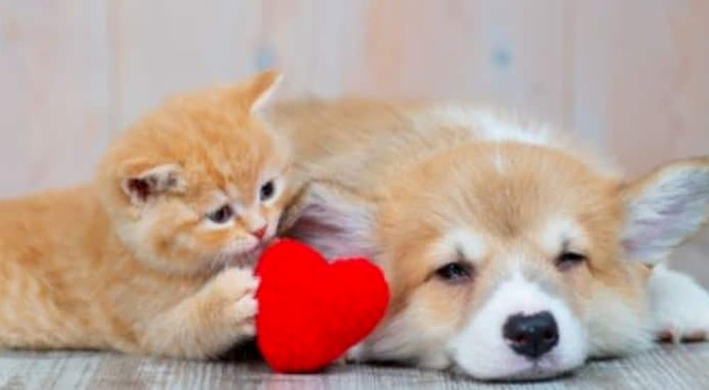 Cat and dog hold a heart object