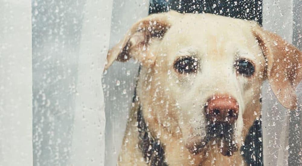 Lab looks at raining outside