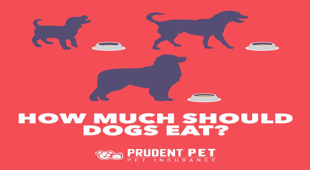 How much should dogs eat banner